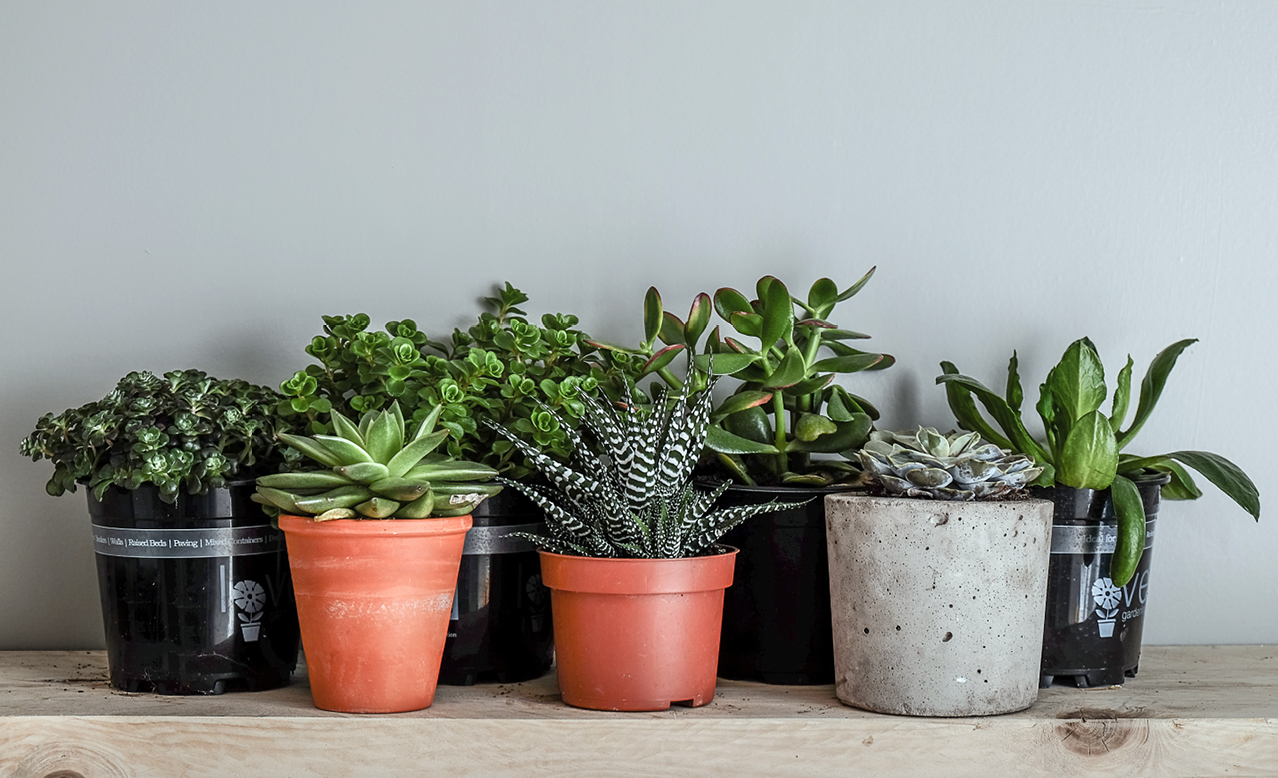 Indoor plants that'll survive without water