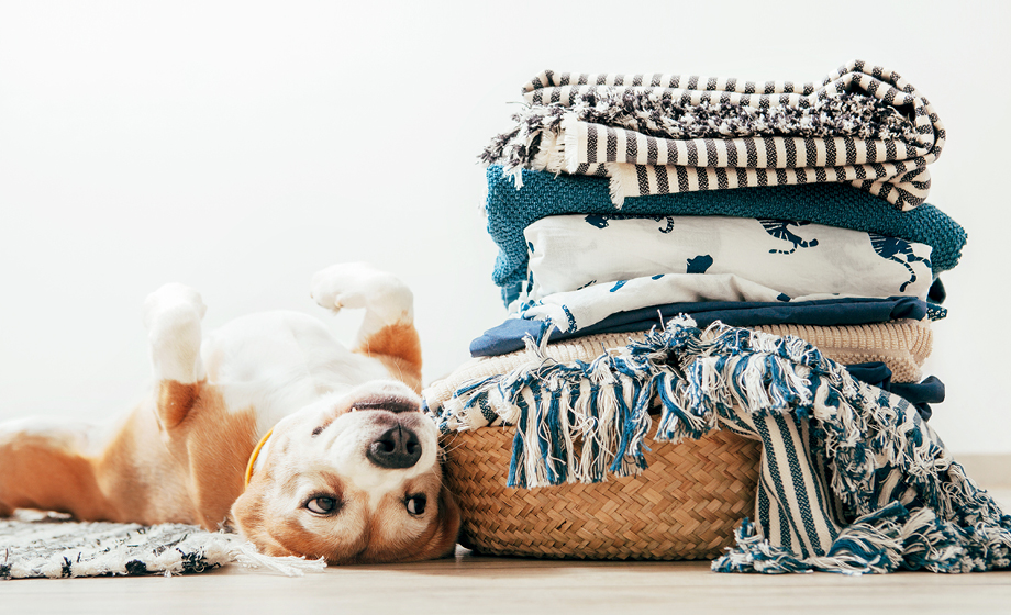 Put cash back in your pocket with pet-sitting